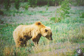 Die schönsten Nationalparks & Wildnisgebiete in Kanadas Westen