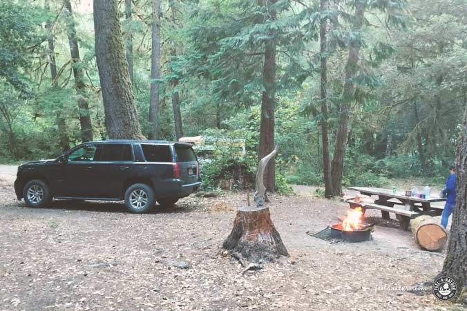 NF Campground