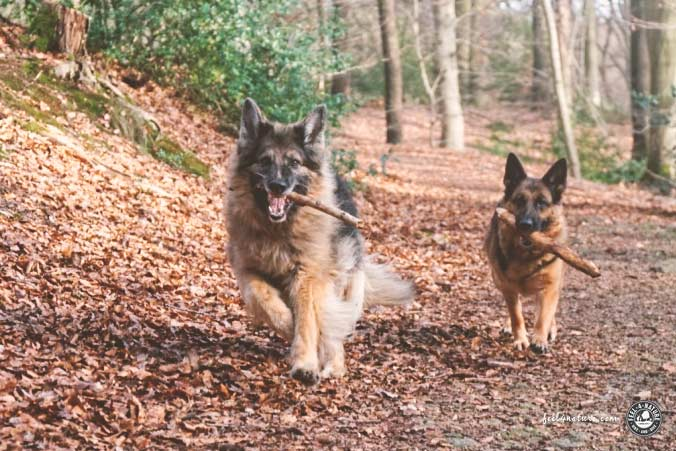 Wandern Hund ohne Leine