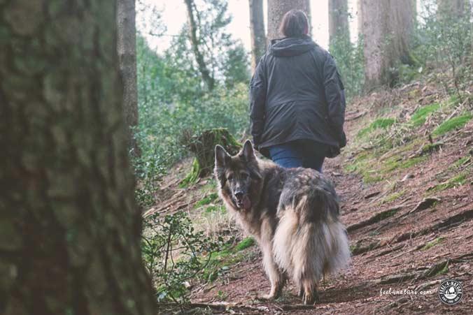 Wanderweg für Hunde