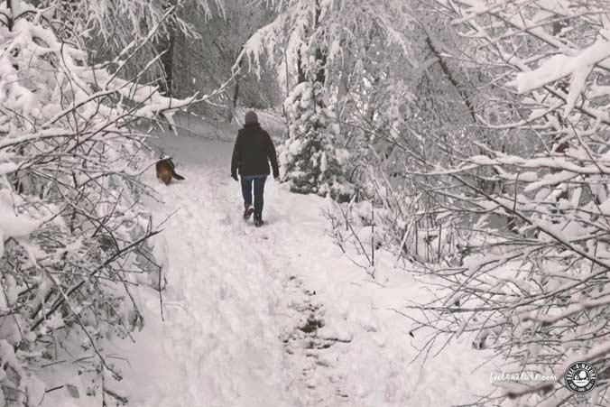Wandern Hund Winter