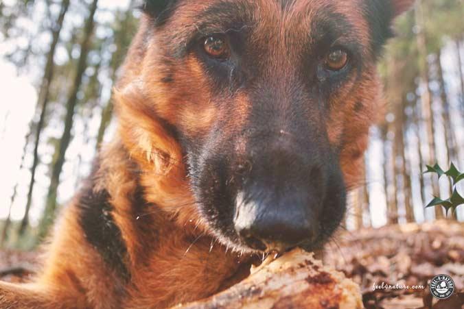 Wandern Hund Aufgaben