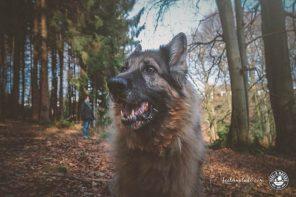 5 wichtige Tipps für das Wandern mit Hund im Urlaub & Daheim