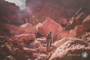 Grand Canyon Wandern, die 13 schönsten Wanderwege im Park