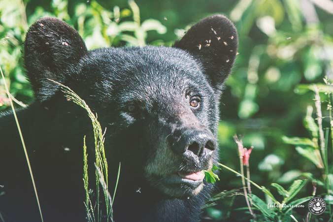 Weltreise Wildlife