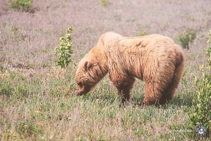 Abstand Bärenbeobachtung