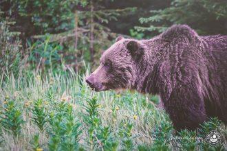 Bären beobachten Tipps