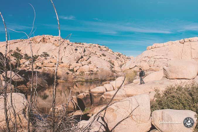Barker Dam Trail JTNP