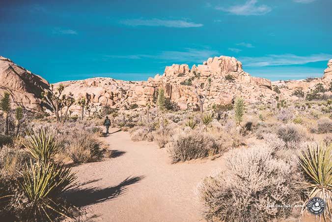 Joshua Tree Nationalparks Tipps Wandern