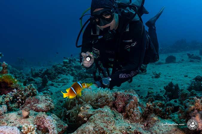 Clownfische Hausriff Abu Dabab