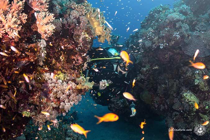 Korallen Abu Dabab Leben
