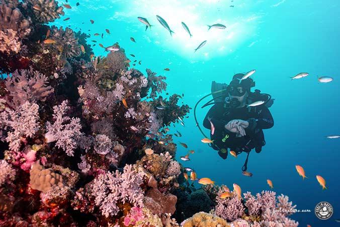 Abu Dabab Korallen