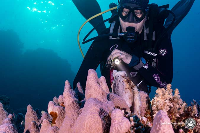 Oktopus Tauchen Marsa Alam