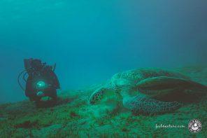 Die Bucht von Abu Dabab, tauchen in Marsa Alam bei Diving.de