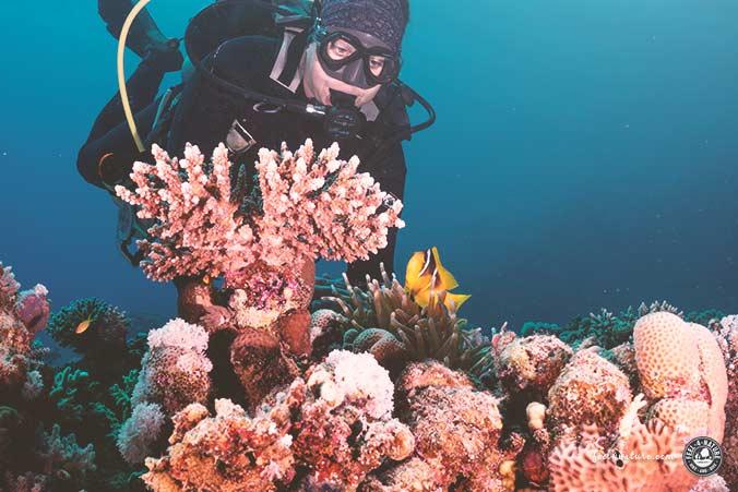 Equinox Extra Divers Clownfisch