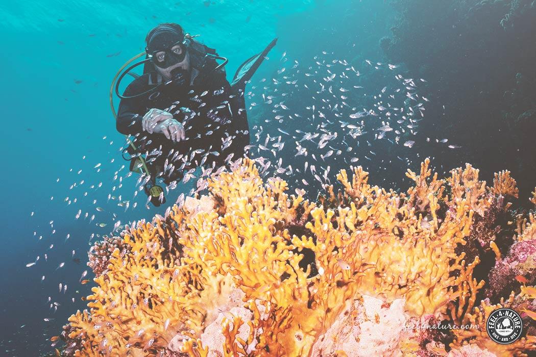 Tauchen und Schnorcheln bei den Extra Divers in Marsa Alam