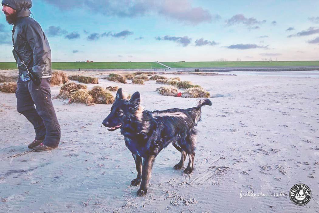 Nordsee Urlaub Hund