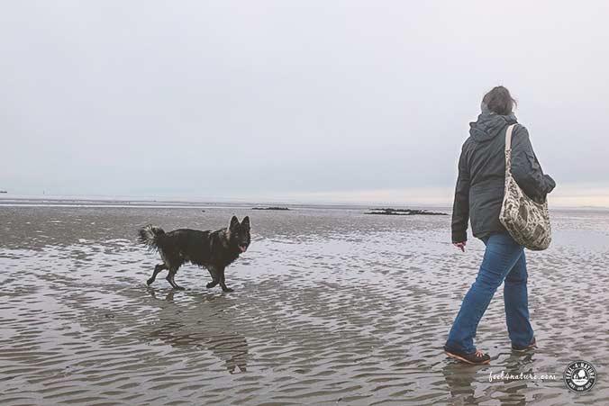 Nordsee Hundestrand