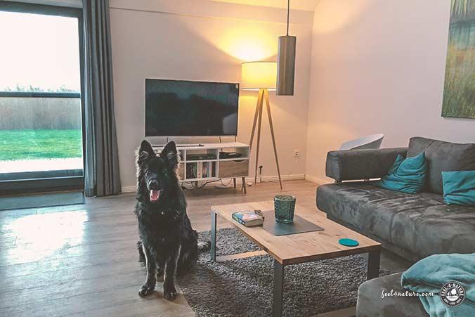 Nordsee Ferienwohnung Hund