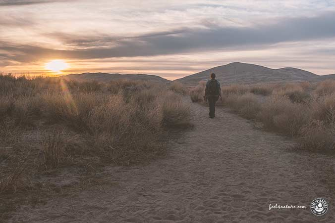 Kelso Dunes Mojave