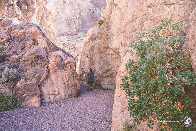 Fall Canyon Wanderung
