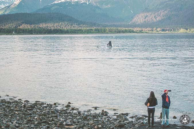Alaska Seward Wale