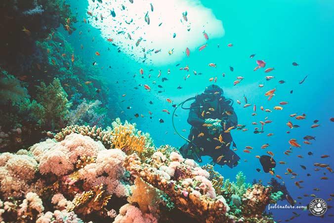 Tauchen Oktober Rotes Meer