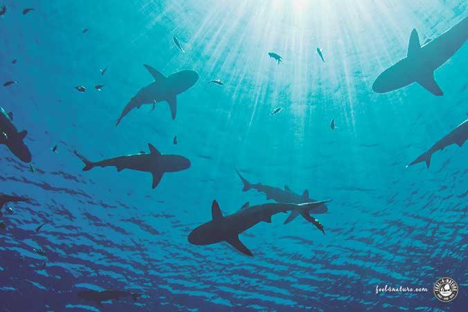 Tauchurlaub Palau