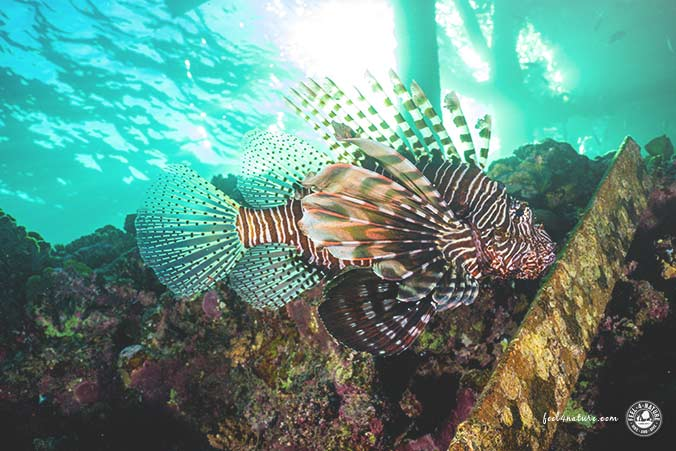Flamenco Beach Schnorcheln Rotfeuerfisch