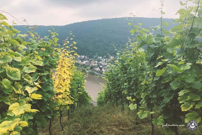 Rheinsteig Etappen Rheingau