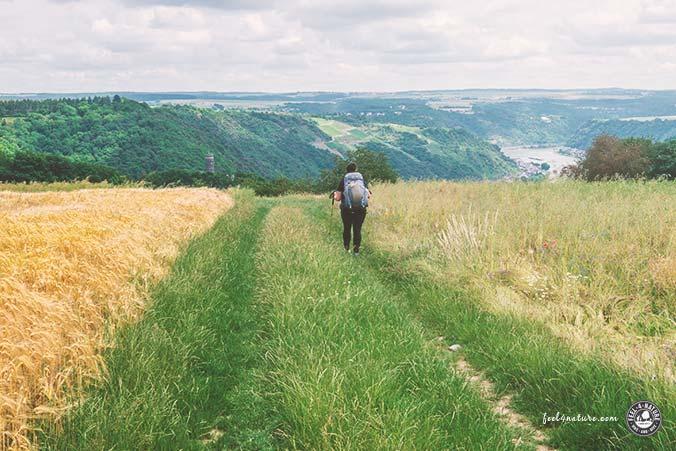Rheinsteig Wanderweg Rheingau