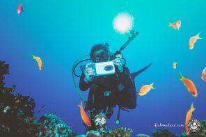 Unterwasserkamera Test, die 10 besten UW Kameras zum Tauchen