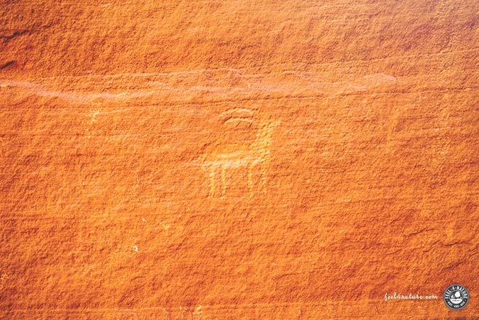 Buckskin Gulch Petroglyphen