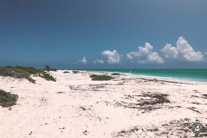 Playa del Carmen Algen