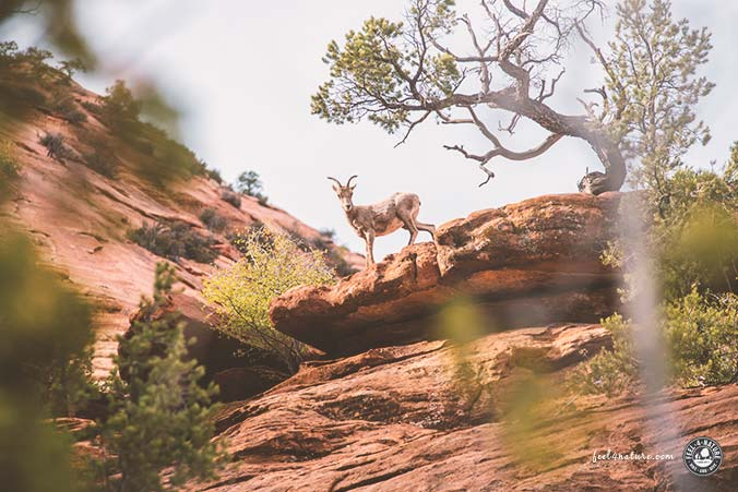 Zion Nationalpark Wanderung Canyon Overlook Trail