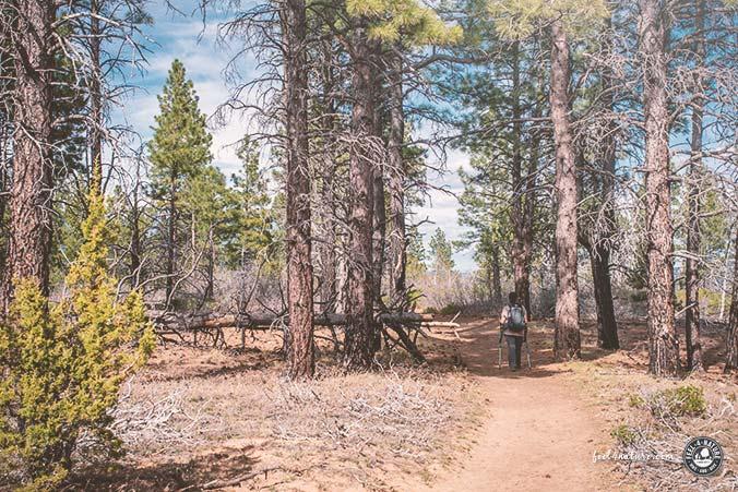 Zion Nationalpark Wanderwege Tipps