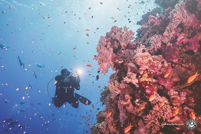 SeaLife Smartphone Unterwassergehäuse